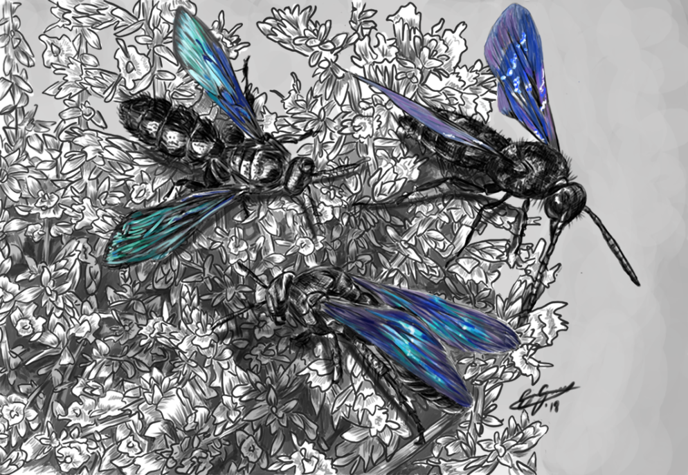 Flowerwasps-Recovered